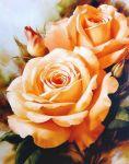 Чайные розы купить